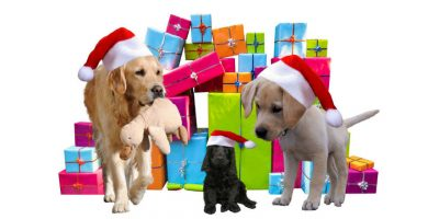 calendarios de adviento para mascotas